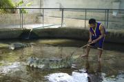Samui Crocodile Farm