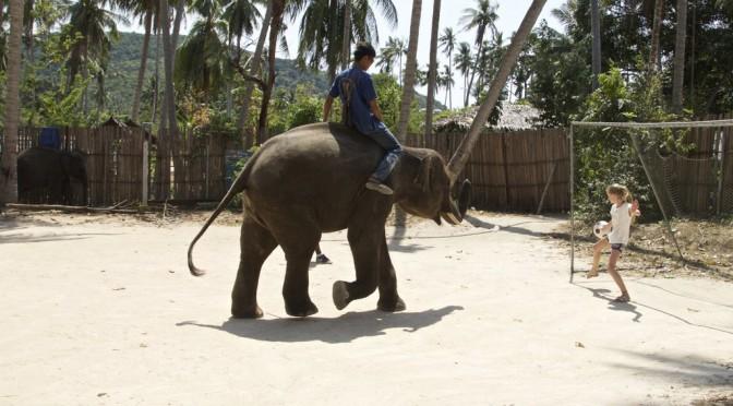Elephant show на Самуи
